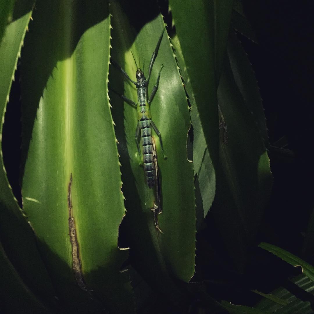 夜間生態導覽